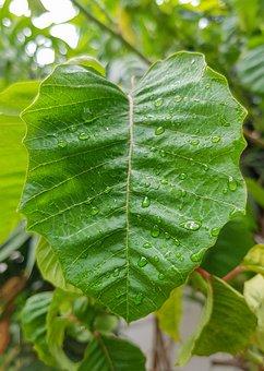 Leaf, Droplets On Leaf, Nature, Droplets, Drops, Water