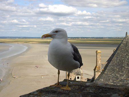 Mont Sant Michelle, Seagull, Sky, Sea, Ebb, Animal