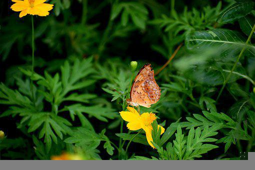 Butterfly, Flower, Insect, Nature, Bloom, Blossom