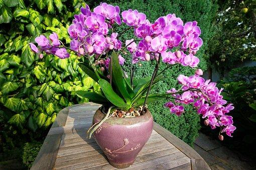 Orchid, Vase, Flower, Plant, Decoration, Flowers, Deco