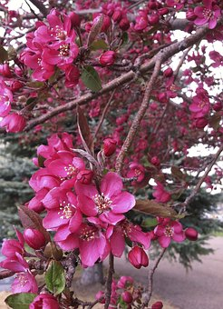 Tree, Flowers, Blossoms, Branch, Nature, Colorful