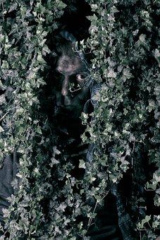 Ivy, Forest, Nature, Green, Leaves, Landscape
