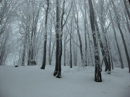 Winter, Frost, Snow, Forest, Tree, Bieszczady
