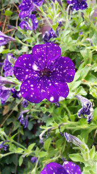 Purple, Flowers, Dot, Nature, Blossom, Garden, Violet