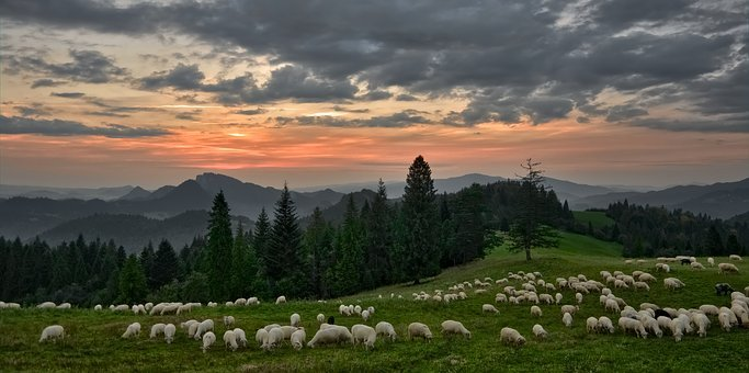 Sunset, Sheep, Mountains, Grazing, Landscape, Sky