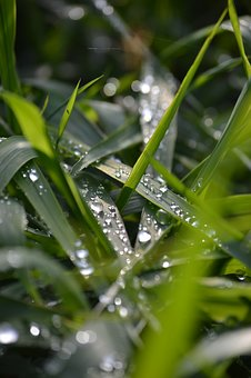 Grass, Raindrop, Plant, Nature, Green, Drop Of Water