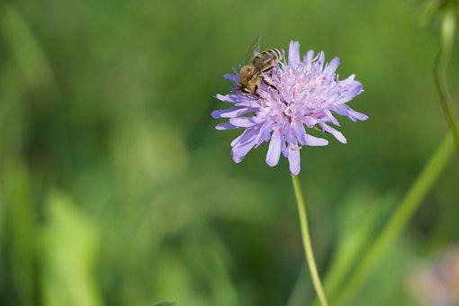 Nature, Rose, Bee, Garden, Honey, Summer, Flower, Bees