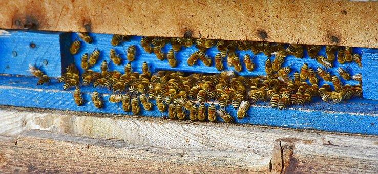 Bees, Beehive, Honey, Insect, Honey Bee, Beekeeping