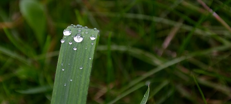 Water, Drop Of Water, Wet, Drip, Liquid, Inject, Macro