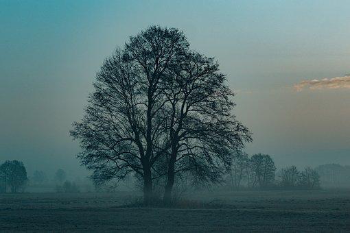 Tree, Sunrise, Morning, Landscape, Sky, Nature, East