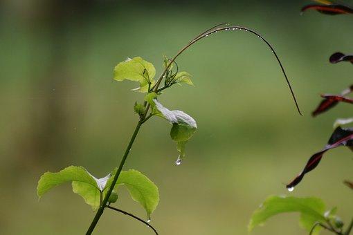 Flower, Kerala, Greenery, Natural, Rain Drops