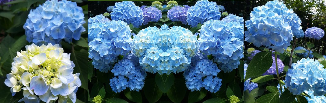 Blue, Summer, Nature, Plant, Bloom, Flower, Blossom