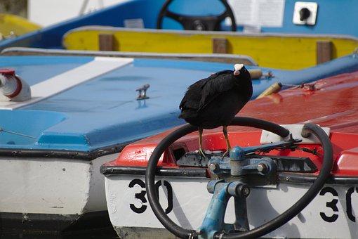 Bird, Boat, Water, Sea, Nature, Sailing Boat, Birds