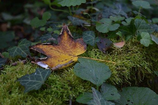 Leaf, Leaves, Orange, Nature, Moss, Forest, Autumn
