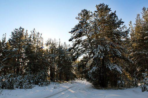 Forest, Pine, Road, Forests, Nature, Trees, Landscape