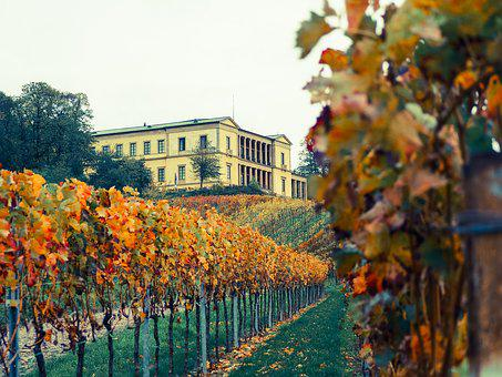 Palatinate, Vines, Castle, Wine, Sachsen, Germany
