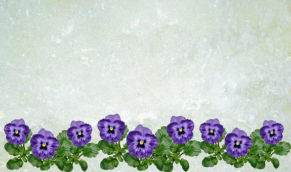 Greeting Card, Pansy, Background, Floral