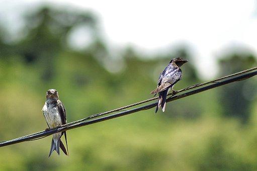 Birds, Bird, Nature, Plumage, Animal, Pity, Flight