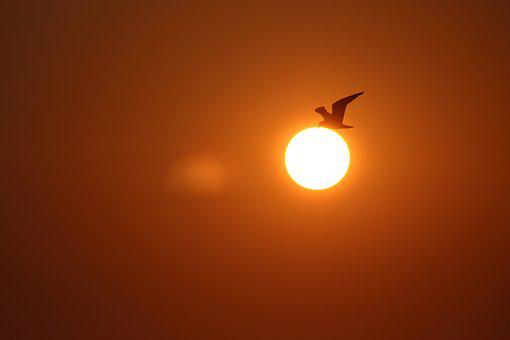 Sunset, Seagull, Sea, Landscape, Sun, Bird, Sky, Flying