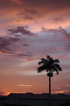 Sunset, Sun, Palm, Tropical, Exotic, Summer, Sky, Mood