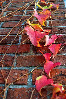 Ivy, Wall, Autumn, Red, Climber Plant, Stone, Entwine