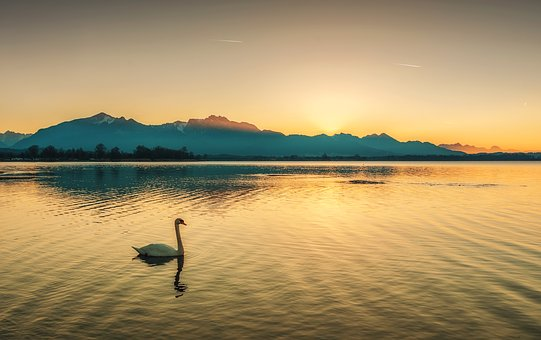 Swan, Mountains, Nature, Landscape, Summer, Mountain