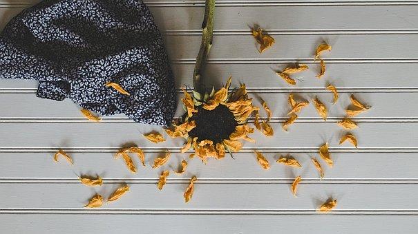 Sunflower, Nature, Bloom, Yellow, Summer, Plant, Petals