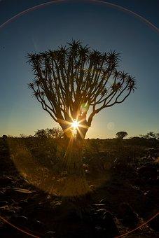 Africa, Sunset, Quiver Tree, Safari, Nature, Landscape