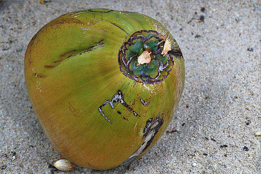 Coconut, Fallen, Sand, Fruit, Thailand, Tropical