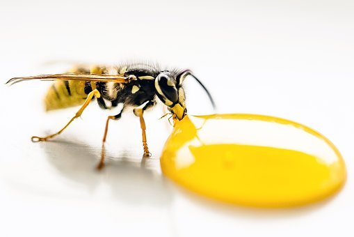 Wasp, Drinking, Lemon, Macro, Insect, Drink, Animal