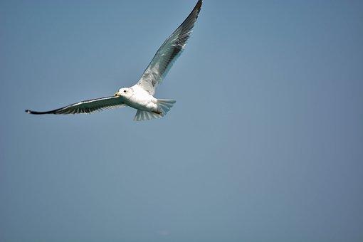 White Pigeon, Sea, India, Indian Ocean, Seabirds, Birds