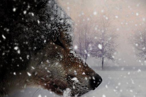 Wolf, Animal, Mammal, Nature, Carnivores, Grey, Wild