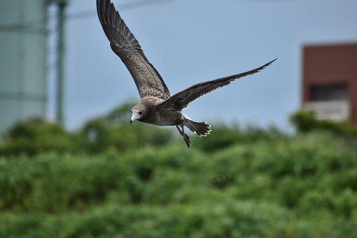 Animal, Sea, Beach, Bird, Wild Birds, Seabird, Sea Gull