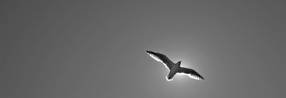 Seagull, Animal, Bird, Wing, Nature, Animal World