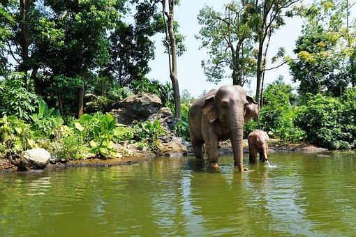 Elephant, China, Summer, Pond, Lake, Animal, Figure