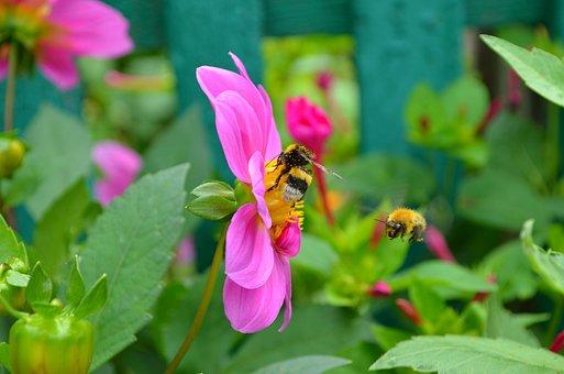 Bees, Bumblebees, Insect, Honey, Bee, Bumblebee, Yellow