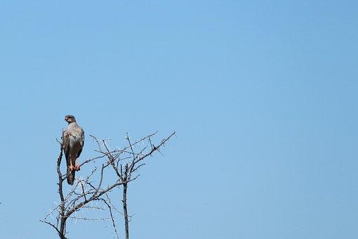 Africa, Etosha, Namibia, Safari, Bird, Sky, Raptor