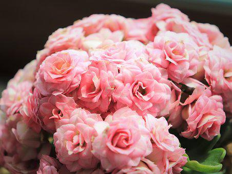 Callan Device, Blossom, Pink, Soft, White, Leaf, Green
