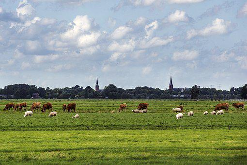 Church, Landscape, Cows