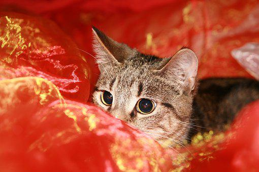 Cat, Lurking, Lauer, Mieze, Pet, Domestic Cat, Cute