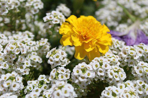 Flowers, White, Zółte, Summer, Flourishing