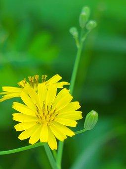 Nature, Plant, Flower, Summer, Leaf, Light, Flower's