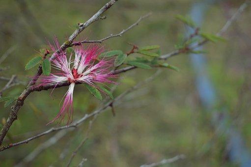 Flower, Plant, Forest, Nature, Flower Soil, Spring