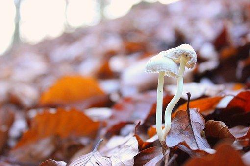 Mushroom, Leaves, Forest, Nature, Autumn, Forest Floor