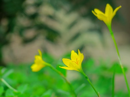 Stormy Blue, Flower, Natural, Yellow, Green, Herbaceous