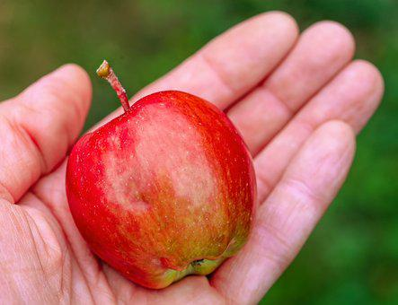 Apple, Harvest, Give, Reach, Hand, Healthy, Nature