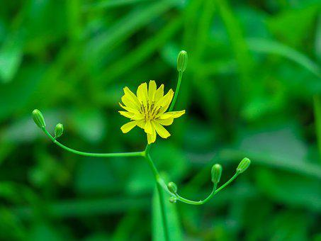 Nature, Plant, Flower, Outdoor, Light, Kinds Of Food