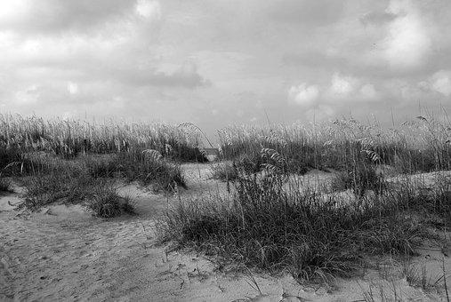 Sea Oats, Beach, Ocean, Landscape, Nature, Protected