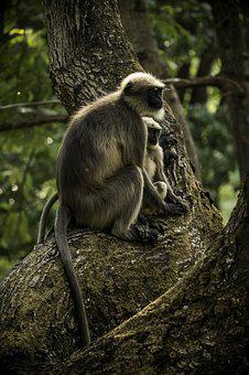 Monkeys, Little Monkey, Monkey, Cute, Nature, Little