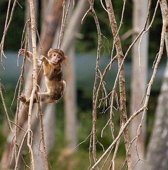 Monkey, Primate, Young Animal, äffchen, Animal, Mammal